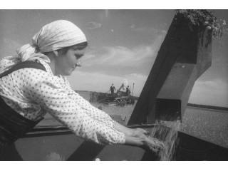 Женщина в поле 1956г.