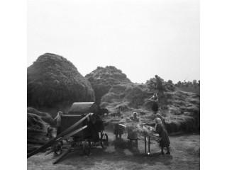 Работа в поле 1908 год.