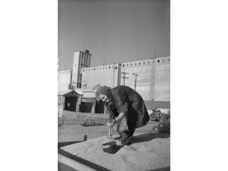 Взятие пробы зерна на элеватор, 1955 год.